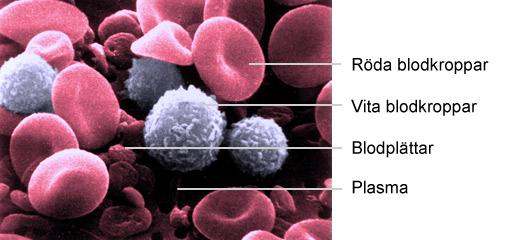 Hur många liter blod har en människa